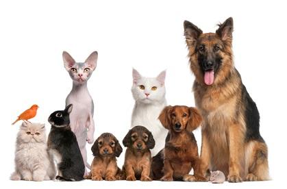 donate_animals2